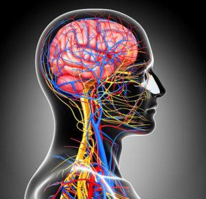 Сосуды шеи и головного мозга