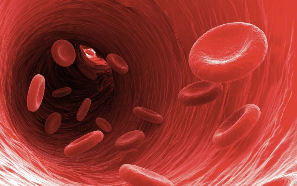 Эритроциты в сосуде
