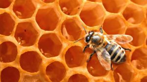 Пчелиный соты и пчела