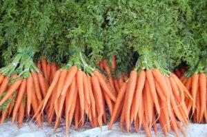 Морковь в пучках